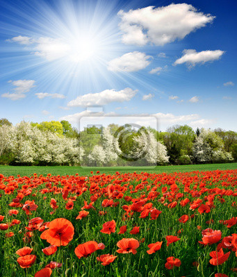 Wall mural Spring landscape with red poppy