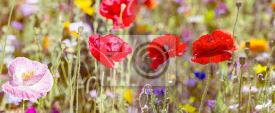 spring meadow with poppies flowers