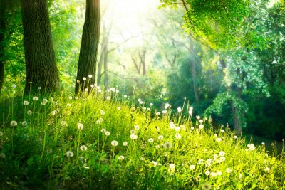 Wall mural Spring Nature. Beautiful Landscape. Green Grass and Trees