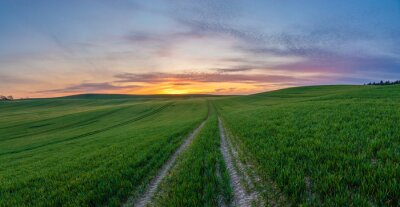 spring panorama of green sown crops during sunset.