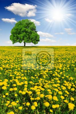 Spring tree on dandelions field