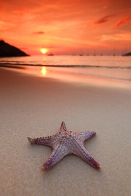 Wall mural Starfish on the beach