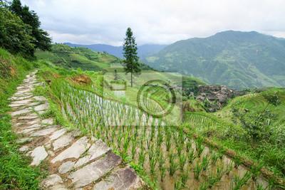 Stone pathway in longshen rice terraces