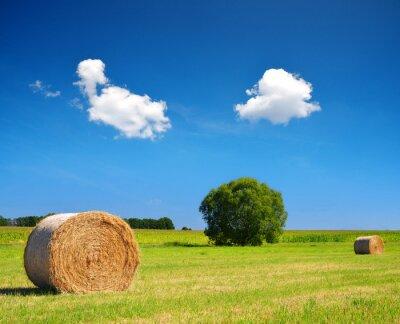 Straw bale on meadow with blue sky