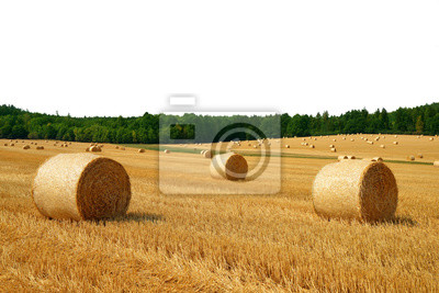 Straw bales on field on white background