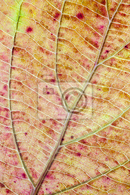 Structure of autumn leaf color