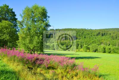 Summer landscape in the National park Sumava, Czech Republic.