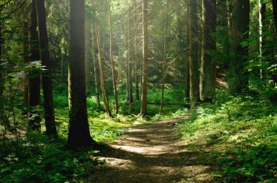 Wall mural Summer sunny forest