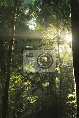Sun rays deep in the rain forest