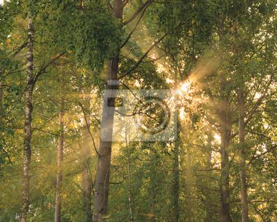 Sun rays through foliage