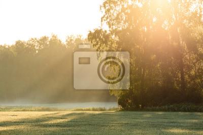 Sun rays through foliage in meadow