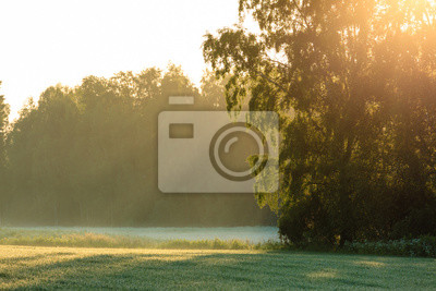 Sun rays through foliage in meadow at summer morning