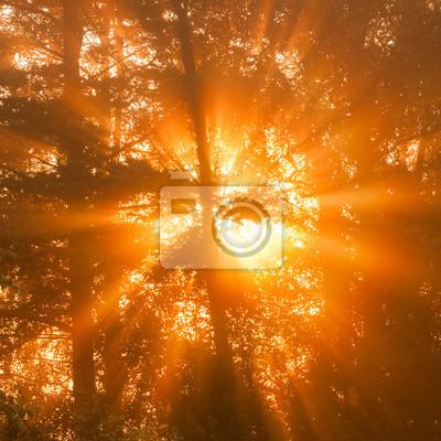 Sunbeams through tree in morning fog  details