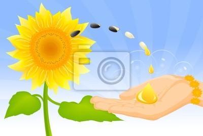 sunflower,
