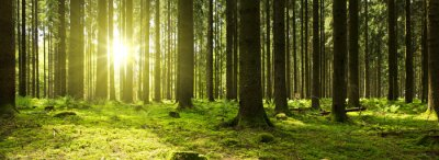Wall mural Sunlight in the green forest.