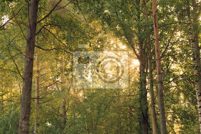 Sunrise sun rays through foliage