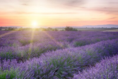 Wall mural Sunset in Provence