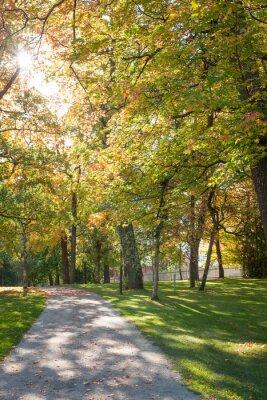 Sunshine through trees in empty city park