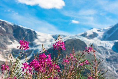 Wall mural Swiss Apls with wild pink flowers