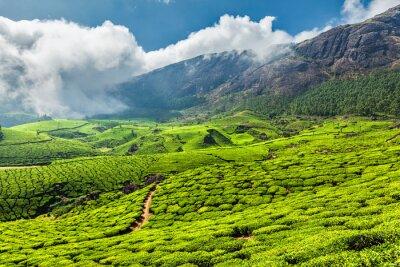 Wall mural Tea plantations in India