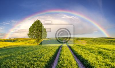 Tęcza nad wiosennym,zielonym polem