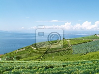 Wall mural terraces of Lavaux