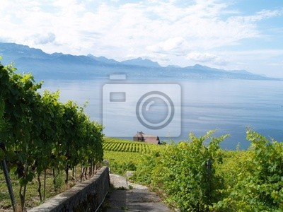 terraces of Lavaux vineyard...