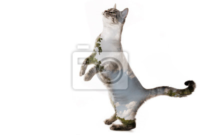 the cat and nature - double exposition - art picture