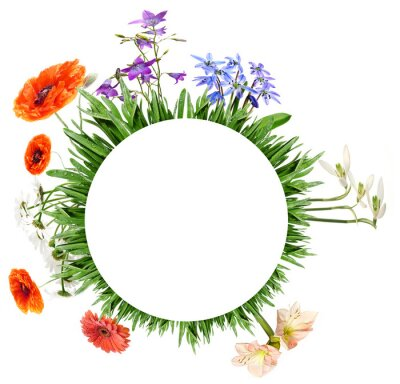 the circle from green grass and spring flowers