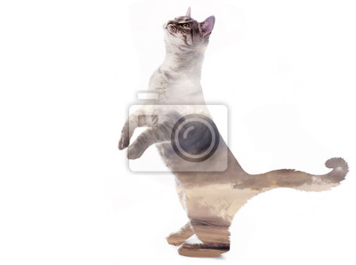 the cute cat - double exposure with sky - art picture