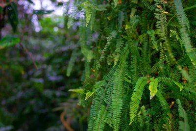 the detail of tropic fern in a greenhouse