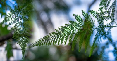 the detail of tropic fern plant in a greenhouse