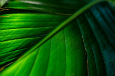 the detail of tropic plant in a greenhouse