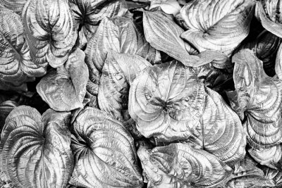 the detail of tropic plant in black and white