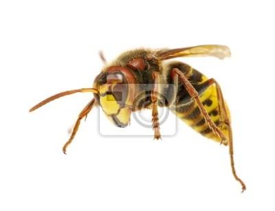 the hornet attacks