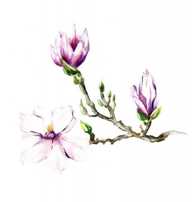 Wall mural the magnolia flowers watercolor isolated on the white background