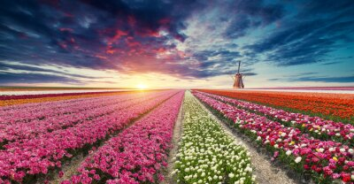 Wall mural The road leading to the Dutch windmills from the canal in Rotterdam. Holland. Netherlands