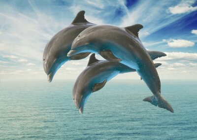 Wall mural three  jumping dolphins