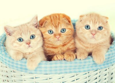 Wall mural Three little kittens in the basket