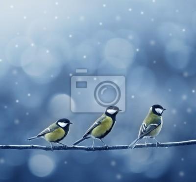 three titmouse birds in winter