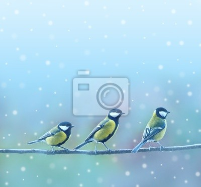 three titmouses birds in winter time