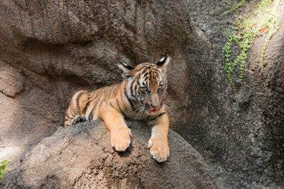 Tiger Cub Portrait