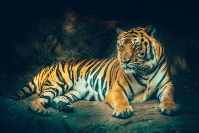 Wall mural tiger with stone mountain background in dark grim majestic dangerous, frightening feeling color effect.