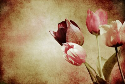 Wall mural tinted tulips textured