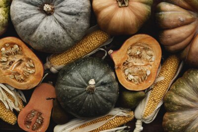 Wall mural Toned autumn background of pumpkins and corn