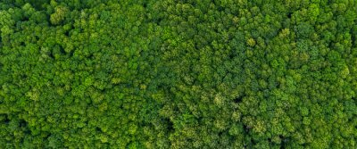 Wall mural top view on the forest panoramic