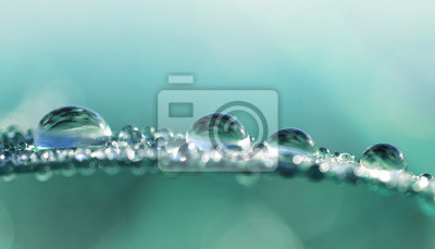 Wall mural Transparent drops of water dew on grass close up.Natural background.