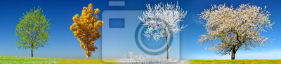 Tree in four season on meadow with clear blue sky at the background.
