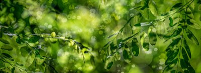 tree leaves and bokeh light background
