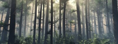 Wall mural Trees in the fog. The smoke in the forest in the morning. A misty morning among the trees. 3D rendering